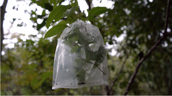 A carrier bag, a vessel, a chrysalis: systems of care, healing, reciprocity and mutual flourishing.